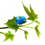 eco-tweet